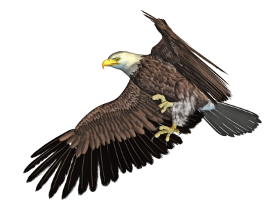 Eagle HD Photo Png PNG Images