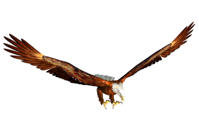 Eagle Clipart HD PNG Images