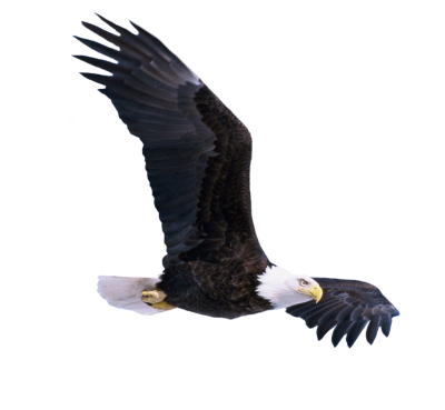 Eagle Free PNG PNG Images