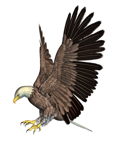 Eagle Clipart Photo PNG Images
