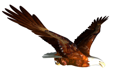 Eagle Photos PNG Images