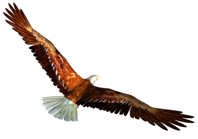 Eagle Images PNG PNG Images