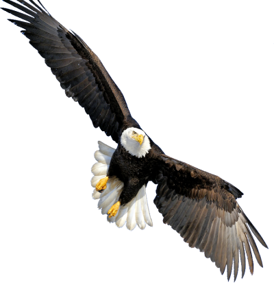 Eagle Vector PNG Images