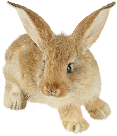 Easter Bunny Hd Image PNG Images