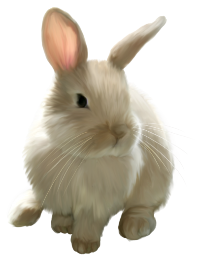 Easter Bunny Best PNG Images