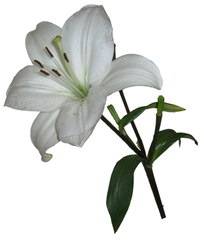 Easter Flower HD Photo Png PNG Images