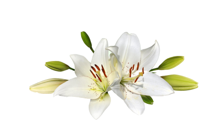 Easter Flower HD Image PNG Images