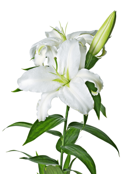 Easter Flower Cut Out PNG Images