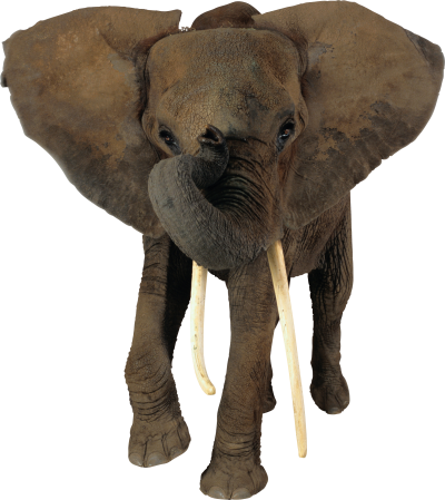 Background Elephant PNG Images