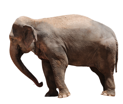 Elephant Amazing Image Download PNG Images