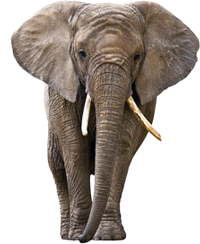 Elephant Amazing Image Download 4 PNG Images