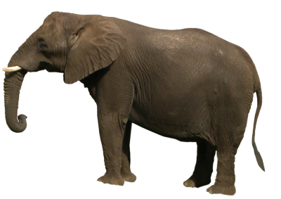 Elephant Cut Out PNG Images