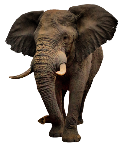 Elephant Free PNG PNG Images