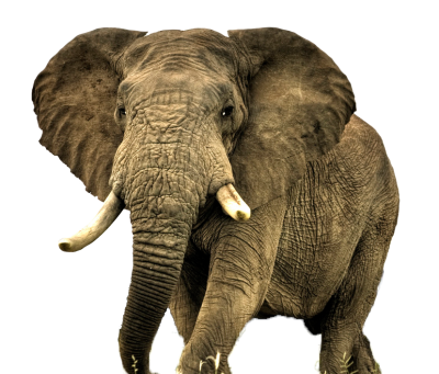 Elephant High Quality PNG