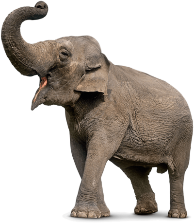 Elephant Png 11 PNG Images