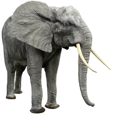 Elephant Transparent Picture