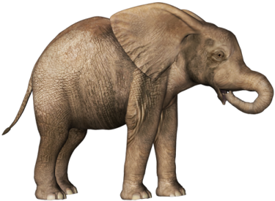 HD Elephant Image