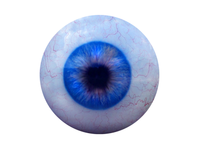 Eye Ball, Ralistic Clipart Transparent PNG Images