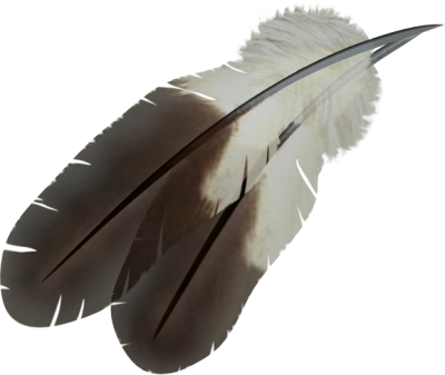 Bird, Feather, Flying, Winged, White, Dark images PNG Images
