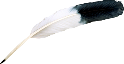 Black, White, Bird Feather, Animal, Feather Png