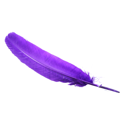 Feather, Purple, Bird, Flying Photo PNG Images
