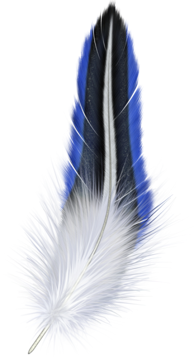 Sparrow, Cotton, Beautiful, Colorful, Feather Png