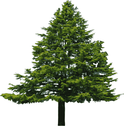 Alive Fir Tree Transparent Png PNG Images
