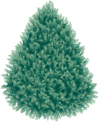 Blue Fir Tree Picture Hd Png PNG Images