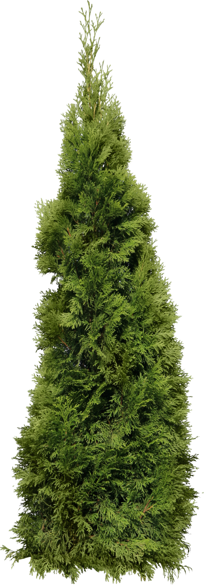 Blurred Fir Tree Transparent Free PNG Images