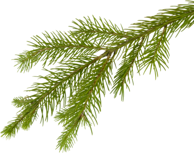Cut Out Green Yellow Fir Tree Free Transparent PNG Images