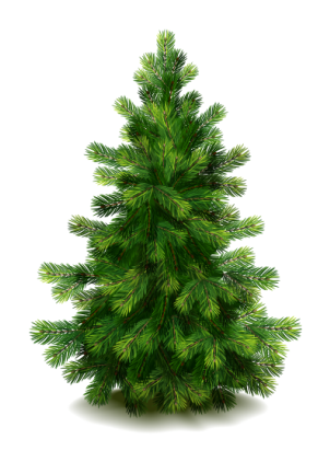 Fir Tree Transparent Free PNG Images