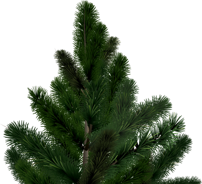 Fir Tree Wonderful Png Clipart PNG Images