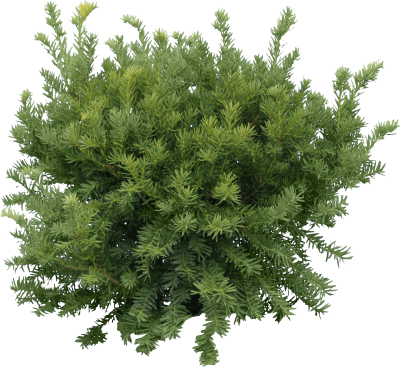Green Fir Tree Png Free PNG Images
