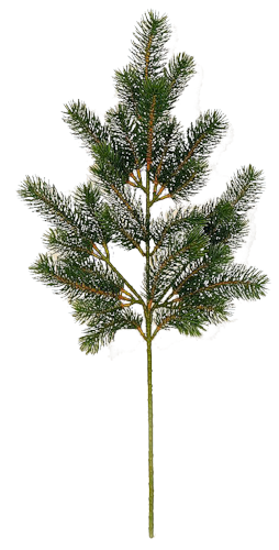 High Quality Fir Tree Free Png PNG Images