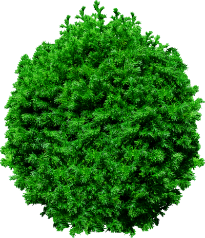 Mixed Fir Tree Png Hd PNG Images