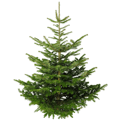 Nature, Fir Tree Transparent Png PNG Images