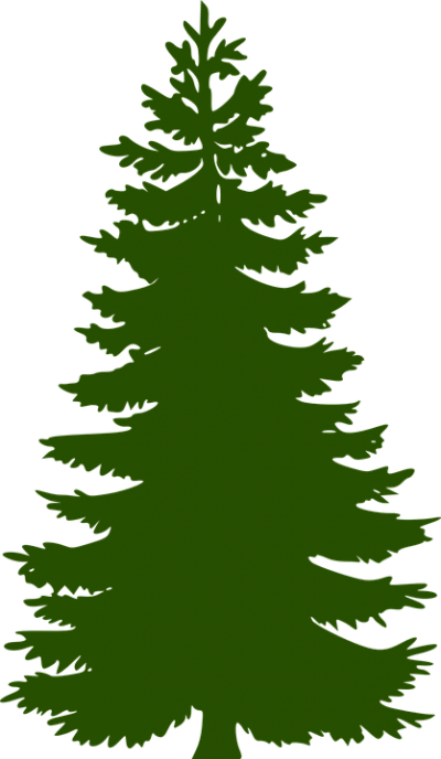 Simple Drawing Fir Tree Free Png PNG Images