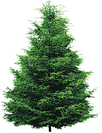 Wonderful Fir Tree Icon Png PNG Images