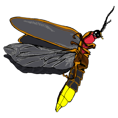 Firefly Icon Clipart PNG Images