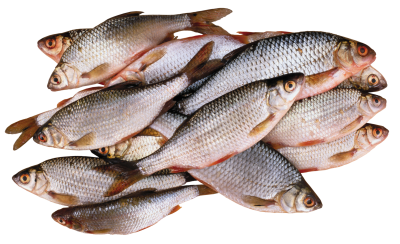 Download Fish PNG PNG Images