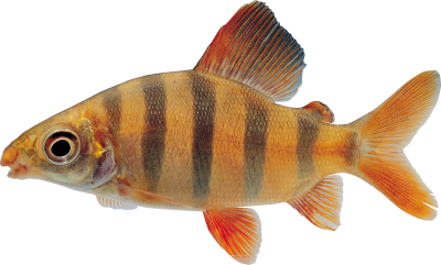 Fish Amazing Image Download PNG Images