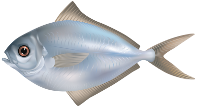 Fish Amazing Image Download 4 PNG Images