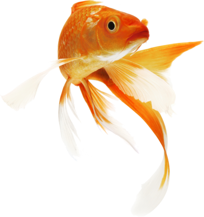 Fish Clipart Icon PNG Images