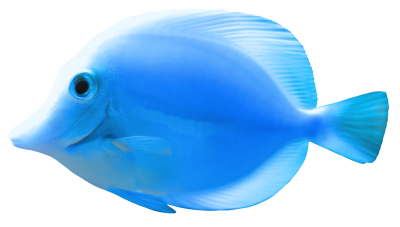 Fish High Quality PNG PNG Images