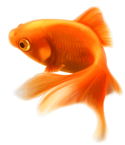 Picture Fish PNG Images