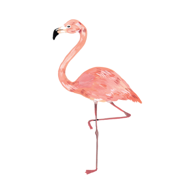 Delicate Pink Flamingo Coloring Photo Hd Png PNG Images