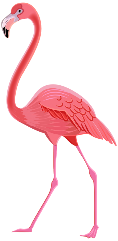 Pink Flamingo With Spread Legs Png Hd PNG Images