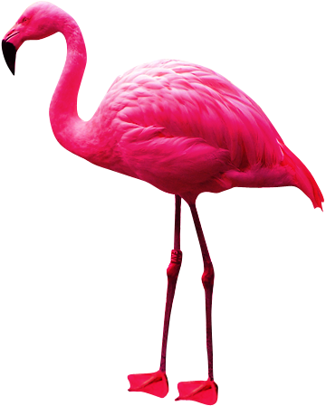 Pink Long Flamingo Png Clipart PNG Images