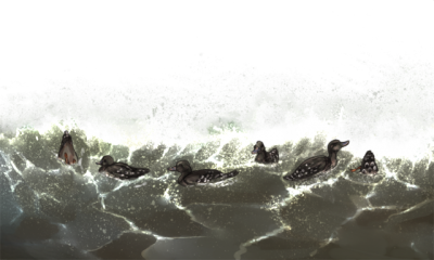 Rain, Sea, Duck Flood Png PNG Images