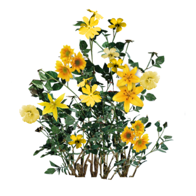 Plant, Seed Beautiful Yellow Floral Transparent Free PNG Images